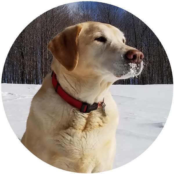 Backwoods dog